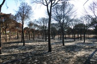 Incendio en Doñana JosechuFT